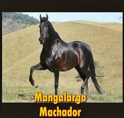 cavalo-mangalarga-marchador